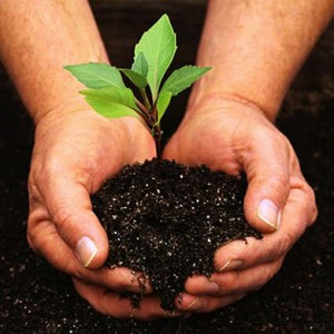 Hands On gardening